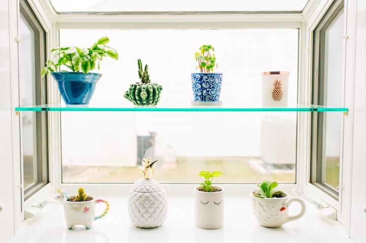 Succulent & CactiPlanting